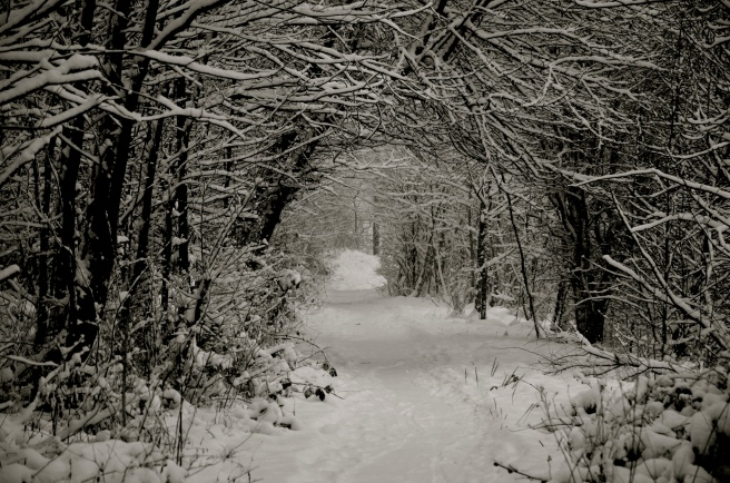 The Snowy Lane